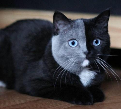 alguien-tiene-un-gato-parecido-a-este.jpg