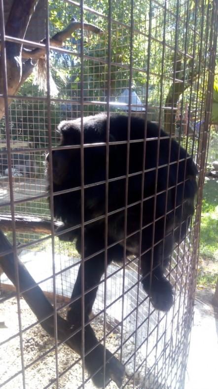 mono-negro.jpg