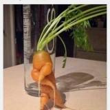 Como-cuando-una-zanahoria-tiene-mas-estilo-que-tu-XD