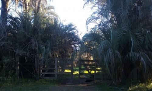 entrada-con-palmeras.jpg
