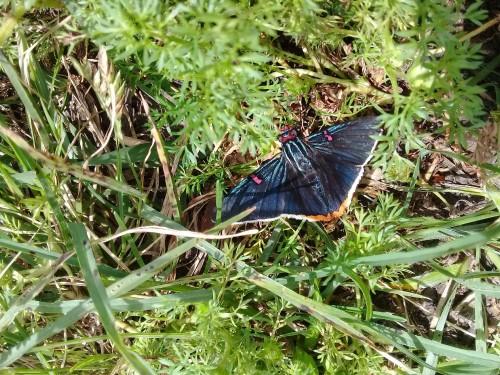 mariposa-muy-rara.jpg