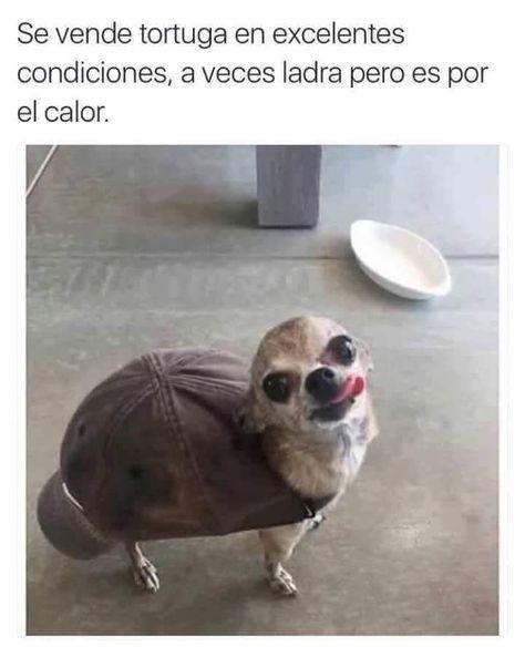 se-vende-tortuga-en-excelentes-condiciones.jpg