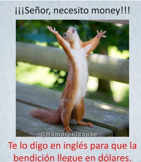 senor-necesito-money.jpg