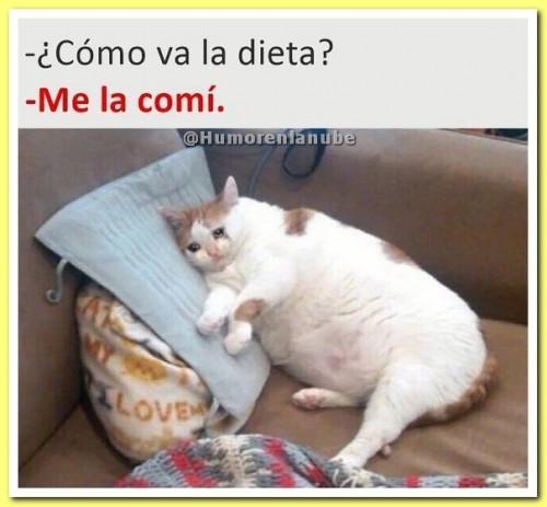 como-va-la-dieta.jpg