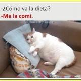 como-va-la-dieta