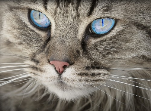 cat-1508613_1920.jpg