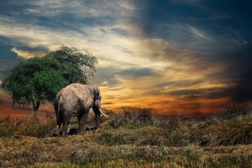 elephant-2729413_1920.jpg