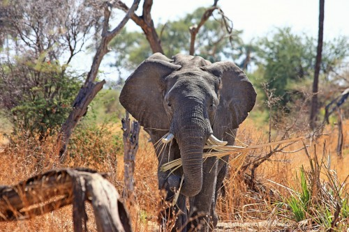 elephant-518186_1920.jpg