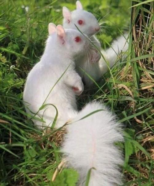 ardilla-albina.jpg