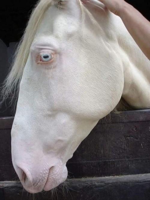 caballo-albino.jpg