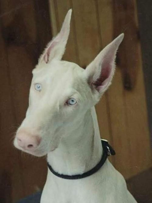 perro-albino.jpg