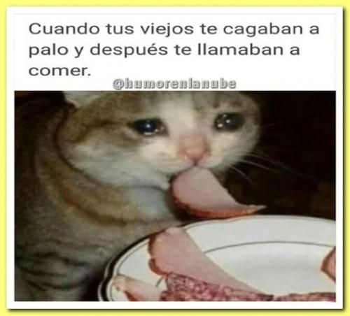memes-de-gatos.jpg