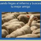 memes-en-espanol