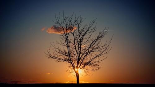 sun-behind-tree.jpg