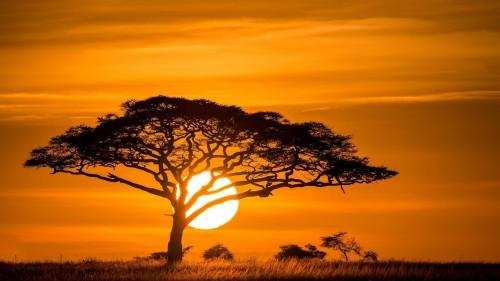savannah-sunset.jpg