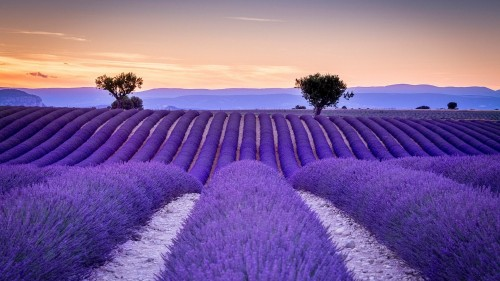 france-lavender-field.jpg