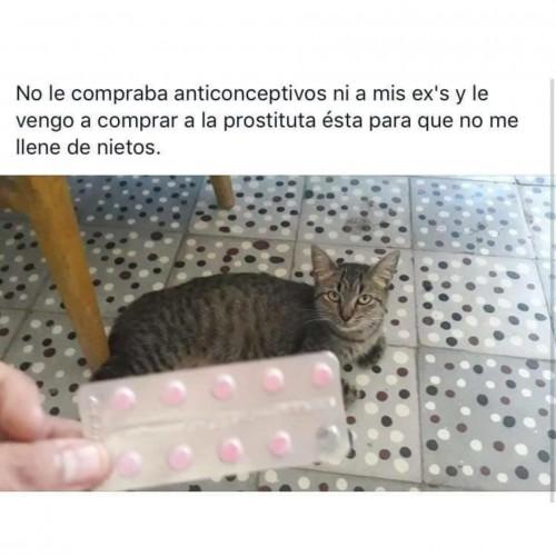 ver-memes-en-espanol.jpg