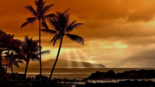 palm_trees_decline_evening_orange.jpg