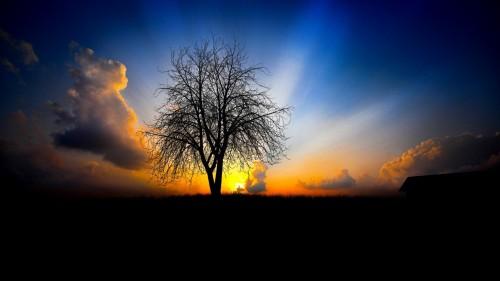 tree_evening_decline_light_beams.jpg