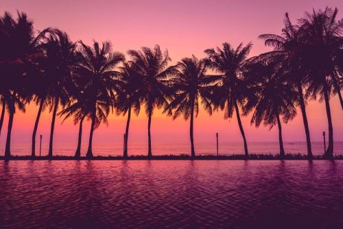 paisaje-atardecer-con-palmeras.jpg