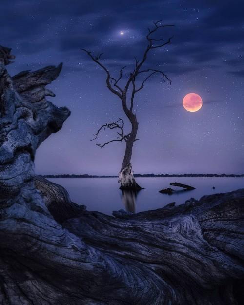 una-noche-estrellada-con-luna-sangrienta.jpg