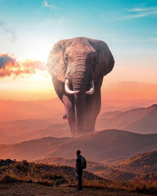 fondo-de-elefante.jpg