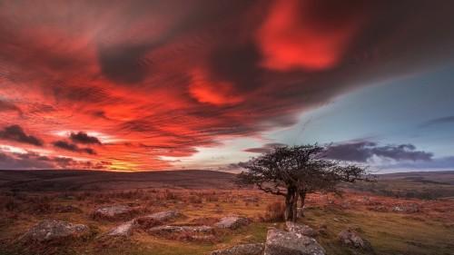 england-dartmoor-dartmoor-national-park.jpg
