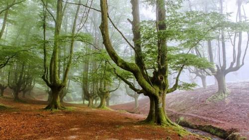 fog-trees-forest.jpg