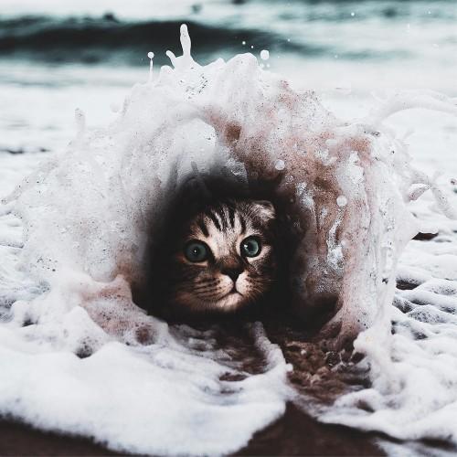 fotos-de-gatitos.jpg