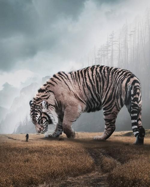 el-tigre-mas-grande-del-mundo.jpg
