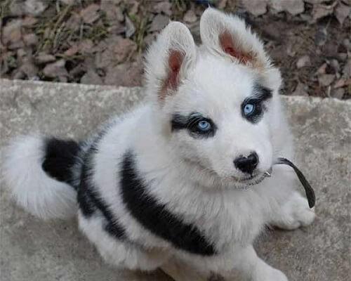perro-hermoso.jpg