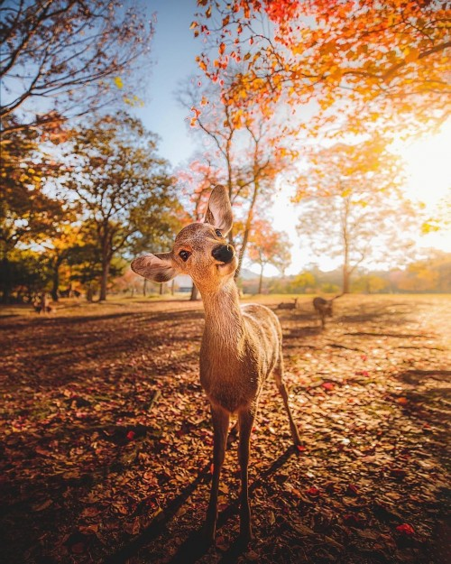 ciervo-comun-foto.jpg