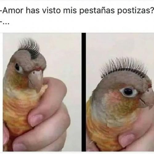 meme-Amor-has-visto-mis-pestanas-postizas.jpg