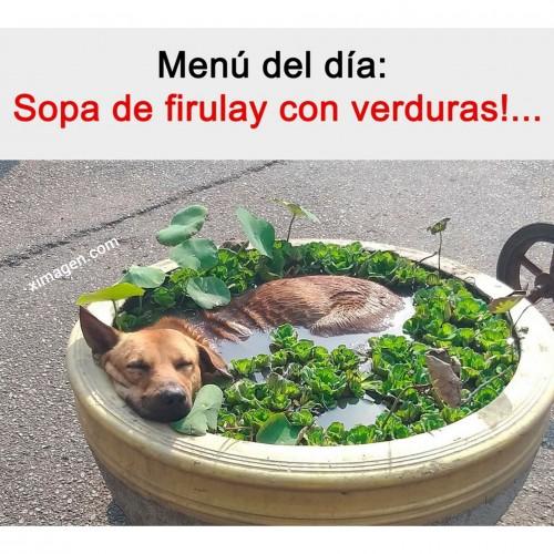 el meme de la sopa de firulay con verduras