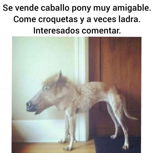 meme-perro-con-cara-de-caballo.jpg