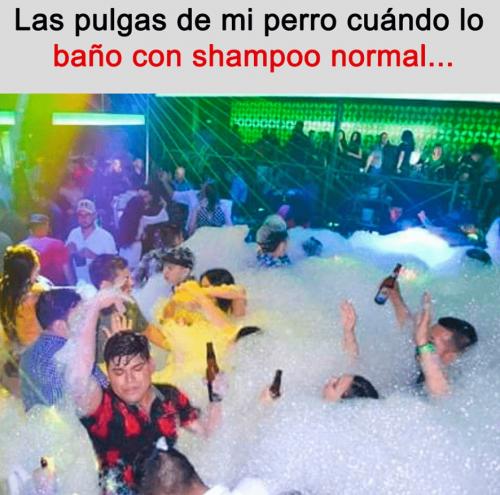 meme-fiesta.png