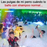 meme-fiesta