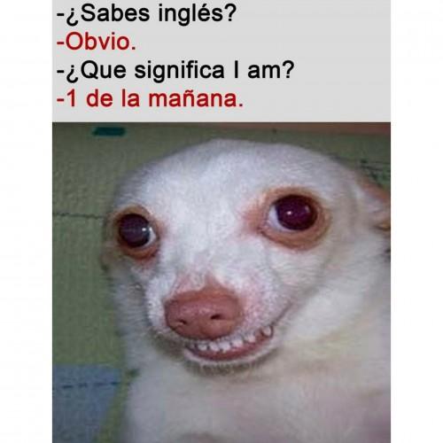 un meme de risa, sabes ingles