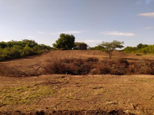 foto-de-la-deforestacion.jpg