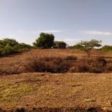 foto-de-la-deforestacion
