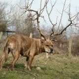 foto-de-un-perro-con-cuernos-en-la-naturaleza