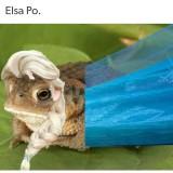 Elsa-Po-meme