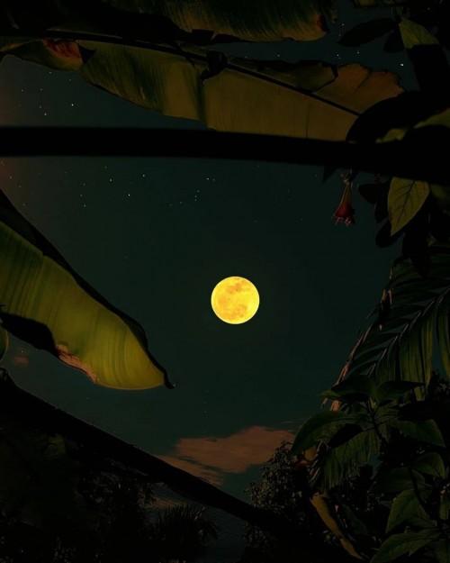 La-luna-con-frase.jpg