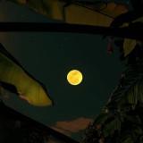 La-luna-con-frase