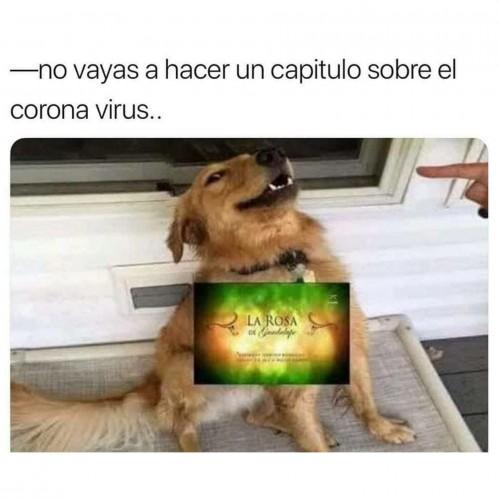 meme-de-la-roza-de-guadalupe-y-el-coronavirus.jpg