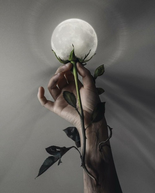 frase-bonita-de-la-vida-con-fondo-flor-de-luna.jpg