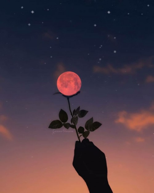 foto - paisaje - arte - anochecer - flor - luna - cielo - estrellado