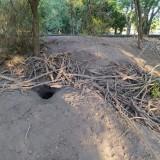 madriguera-de-vizcacha-3