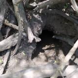 madriguera-de-vizcacha-4
