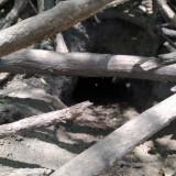 madriguera-de-vizcacha-5